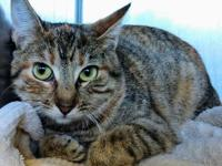 Jenna's story Jenna is a shyer cat who is looking for