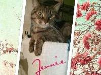 Jennie's story HJennie is a stunning Brown tabby that