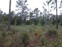 Unique Hunting Property Next To State Protected Land