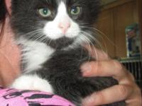 Jerry is a Tuxedo Maine Coon mix, a sweet-natured boyHe