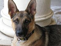 Jerry Lee's story Adoption fee on this dog is $350. We
