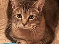 Jersey's story Jersey came to Purrfect Pals after his
