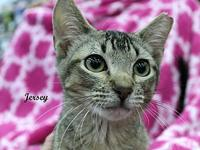 Jersey's story The adoption fee is $85.00 with an