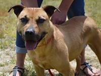JERSEY-URGENT's story We do not euthanize any dogs,