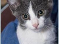 JESSE's story $97.50 FEE INCLUDES: neutering/spaying,