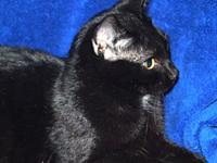 Jesse's story Jesse is a neutered male cat, birthdate