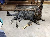 Jesse James's story From Campus Cats in Athens,