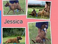Jessica's story Sweet Jessica was thrown over a fence