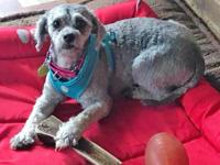 Meet Jessica!  This little poodle mix is currently in