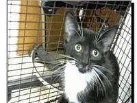 Jessicat's story Visit this organization's web site to