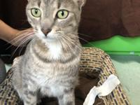 Jessie is a very sweet kitty, she is loving and