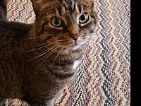 Jessie's story Jessie is a 12 year old brown tabby