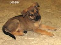 Jessie's story Hi, My name is Jessie. I came from Texas