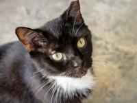 Jessie's story Meet Jessie who is an affectionate cat