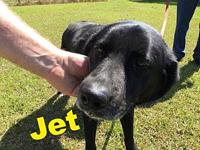 Jet's story Please understand we must conduct home