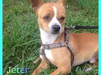 Jeter's story Hi friends my name is Jeter. I'm a 2 year