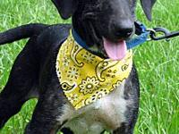 Jethro's story Meet gorgeous Jethro! Jethro has the