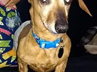 Jethro's story Jethro is a very friendly dachshund with