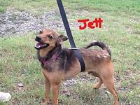 "JETT's story ""JETT"" is an active, loveable, playful"