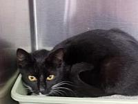 Jewels's story By adopting me today you will save the