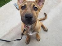 Jewels is an adorable 5 month old Shepard mix pup. She