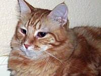 Jewels's story What a handsome boy. A Polydactyl (extra