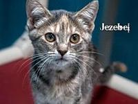 Jezebel's story All of our pets are spay/neut, up to