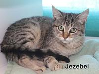 Jezebel's story Cute and cuddly is fur baby is Jezebel,