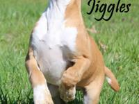 What a happy and sweet pup this is. JIggles is about 10