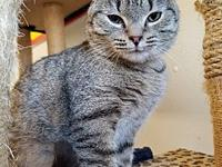 My story JILL! Beautifully tiger tabby JILL. JILL is