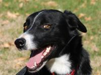 Jilly is a very sweet 2 year old Border Collie. She