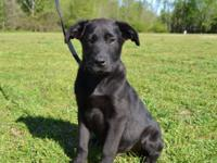 Jim is a good-looking 10 week old Mixed Breed puppy,