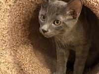 Jimbo's story To meet this kitty, fill out an adoption