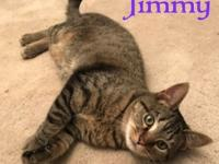 Jimmy is an energetic, goofy 1 yr old male kitty.  He