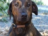 Jimmy's story Jimmy Plott Hound Mix Red Bluff, CA Young