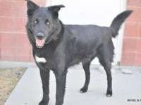 Jimmy's story Meet Jimmy! Jimmy is a male, 8 year old,