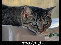 JINGA's story Jinga was a feral that had wandered up to