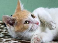 Jingles's story PURRFECT DAY CAF RESIDENT I'm up for