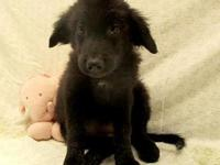 Jingles's story 18-D08-021 Jingles Breed: Lab / Collie