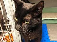 Jinx's story All available cats are spayed or neutered,