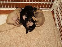 Jitter Bug Pups's story You can fill out an adoption