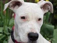 Jitterbug's story Jitterbug is a 1-year-old mixed-breed