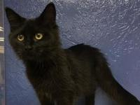 JJ's story JJ is a spunky jet black kitten with