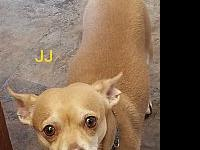 JJ's story JJ is a sweet and loving neutered 4 year old