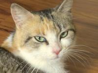 Joan is a gorgeous calico female about 18 months old.