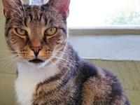 Joan's story Joan is a 10-year-old domestic shorthaired