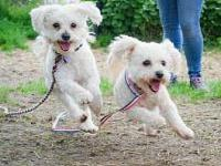 Joanie and Chachi's story FOSTER OR ADOPTER NEEDED