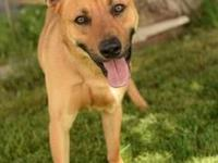 Jodeci's story Meet Jodeci! He is a 2 year old shepherd