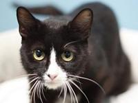 Jodi's story This cat is ready for a forever home! They