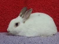 Jodie is a lovely bunny who is waiting patiently for